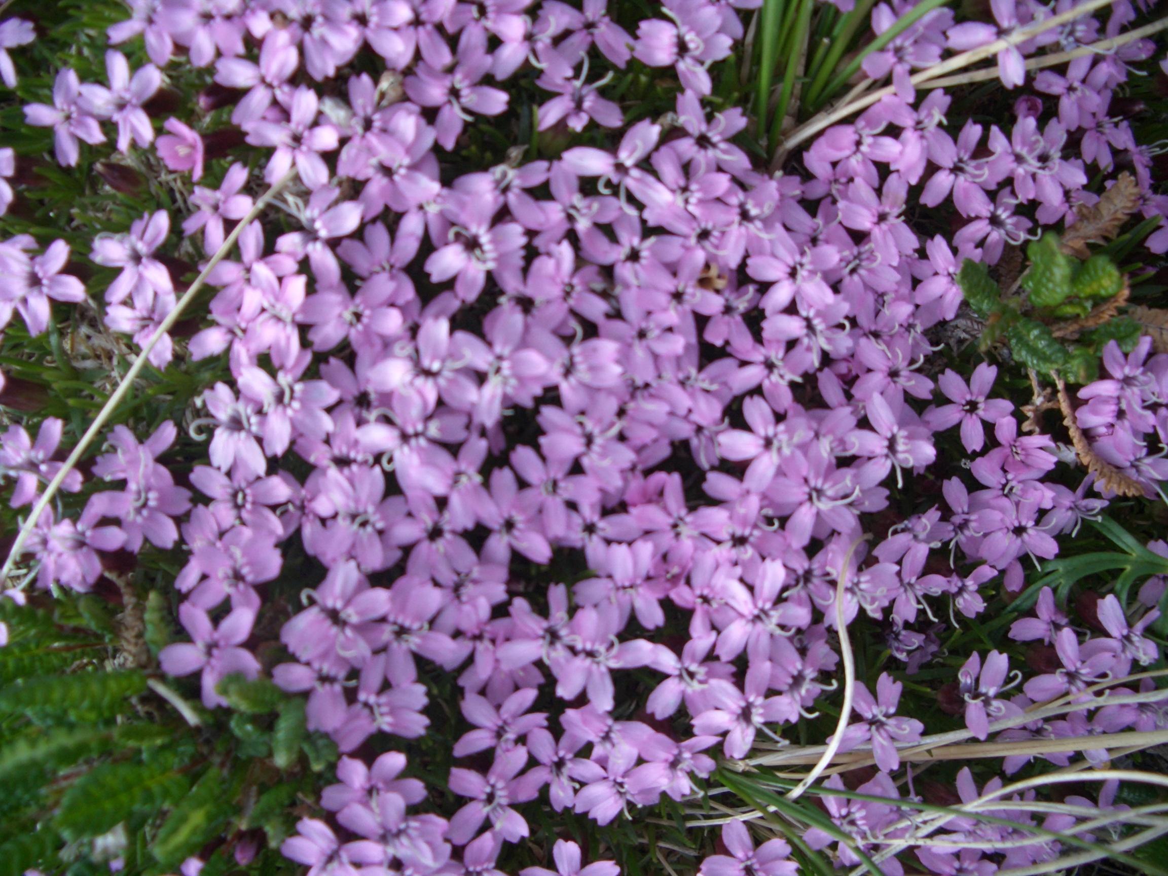 polaranimals Wildflowers